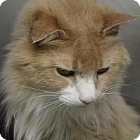 Adopt A Pet :: Snarf - Menands, NY