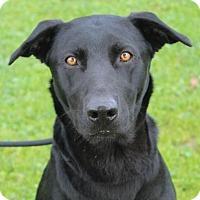 Adopt A Pet :: TETON - Red Bluff, CA