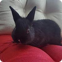 Adopt A Pet :: Oliver (Coal) - Los Angeles, CA