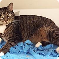 Adopt A Pet :: Shilah-Marie - Colorado Springs, CO