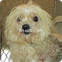 Adopt A Pet :: Lily - Rocky Mount, NC