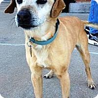 Dachshund/Terrier (Unknown Type, Medium) Mix Dog for adoption in Bedford, Texas - Rex