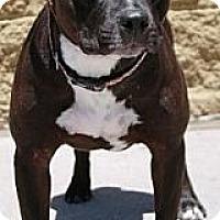 Adopt A Pet :: Penny Lane - Gilbert, AZ