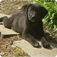 Adopt A Pet :: Trevor - Adamsville, TN