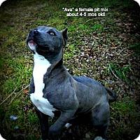 Adopt A Pet :: Ava - Gadsden, AL