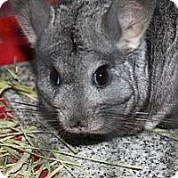 Adopt A Pet :: Benson - Titusville, FL