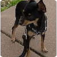 Adopt A Pet :: Zelda - Only $85 adoption fee! - Litchfield Park, AZ