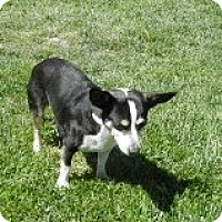 Adopt A Pet :: Spice - Lacey, WA