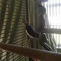 Adopt A Pet :: Santiago - Neenah, WI