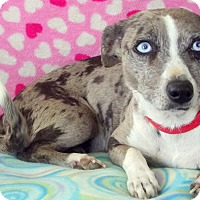 Adopt A Pet :: Quie Quie - Creston, CA