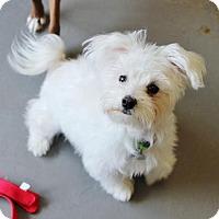 Adopt A Pet :: Casper - Smyrna, GA