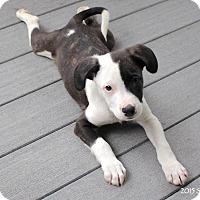 Adopt A Pet :: Alan - Bedford, VA