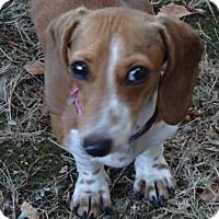 Adopt A Pet :: No Name Red - Portland, OR