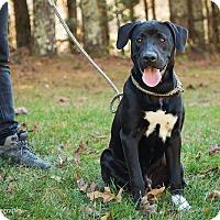 Adopt A Pet :: Roco - Cashiers, NC