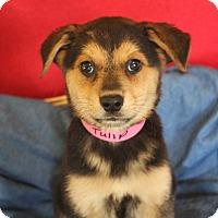 Adopt A Pet :: Carnation - Waldorf, MD