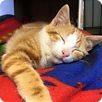 Adopt A Pet :: Gordon - Island Park, NY