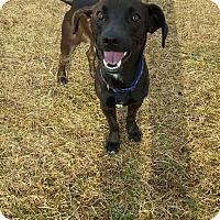 Adopt A Pet :: Tucker - Grand Rapids, MI