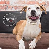 Adopt A Pet :: Angel - Apache Junction, AZ