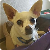 Adopt A Pet :: Diesel - Neosho, MO