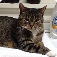 Adopt A Pet :: Rosie - LaGrange, KY