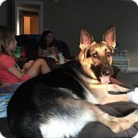 Adopt A Pet :: Scout (CL) - Greensboro, NC