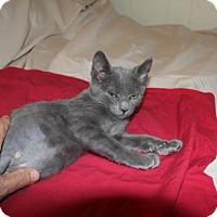 Adopt A Pet :: Jade KITTEN - tampa, FL