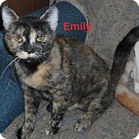 Adopt A Pet :: Emily - Pensacola, FL