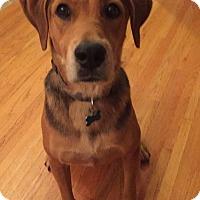 Adopt A Pet :: Jolie - Minneapolis, MN