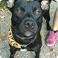 Adopt A Pet :: Ruger - Pottsville, PA