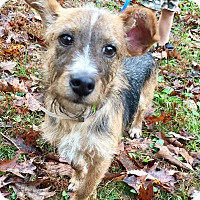Adopt A Pet :: Pablo - Goodlettsville, TN