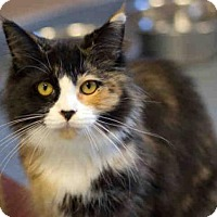 Adopt A Pet :: SPICE - Maumee, OH