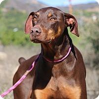Adopt A Pet :: Roscoe - Fillmore, CA