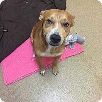 Adopt A Pet :: Harris - Miami, FL