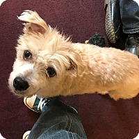 Adopt A Pet :: Charlie - Potomac, MD