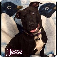 Adopt A Pet :: Jesse - 058 / 2017 (formerly Savannah) - Maumelle, AR