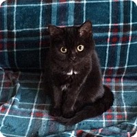 Adopt A Pet :: Bobblehead - Chicago, IL