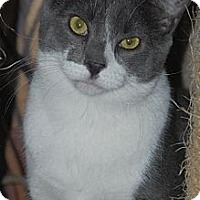 Adopt A Pet :: Mitch - Philadelphia, PA