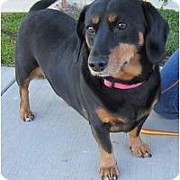 Adopt A Pet :: Rosie - San Jose, CA