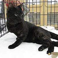 Adopt A Pet :: Felix - Vero Beach, FL
