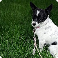 Adopt A Pet :: PINTA - Minnetonka, MN