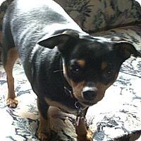 Adopt A Pet :: Chance - Nine Mile Falls, WA