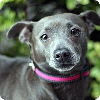 Adopt A Pet :: Annie Bo Bannie - Woodland, CA