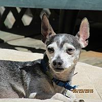 Adopt A Pet :: Snoopy - Wapwallopen, PA