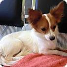 Adopt A Pet :: Zoey (in Alabama)