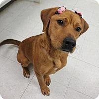 Adopt A Pet :: Oggie - Yukon, OK