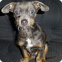Adopt A Pet :: Buttons - Wyanet, IL