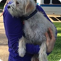 Adopt A Pet :: Lance - Boston, MA
