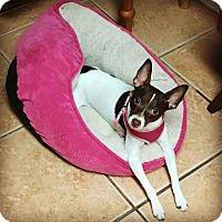 Adopt A Pet :: Delilah - Davie, FL