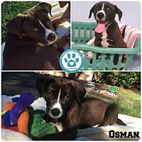Adopt A Pet :: Osman - Kimberton, PA