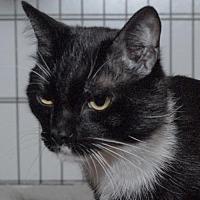 Adopt A Pet :: Quentin - Jaffrey, NH